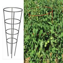 Galvanizado Round Tomato Cage protege seus tomates de cair