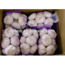 4cm Fresh Pure White Garlic