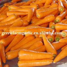 2016 nuevo cultivo semillas de zanahoria fresca precio