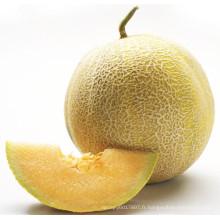 HSM13 Erding ronde jaune doré hybride F1 graines de melon sucré