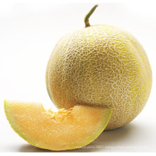 HSM13 Erding round golden yellow F1 hybrid sweet melon seeds