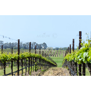 Vineyard Vertical Shooting System