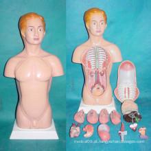 45cm Peças do corpo humano americano Modelo de anatomia médica