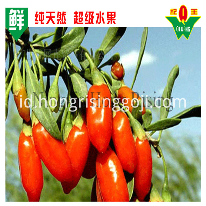 Fresh Goji Berry 17