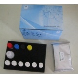 Human Acylated Ghrelin ELISA Kit