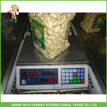Peeled Garlic Fresh Garlic For Sale