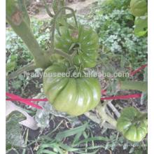 T51 Mati fruta grande tamaño indeterminado semillas de tomate especiales
