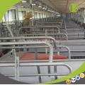 Mise en cage caisse à vendre Pig Farm équipements Sow Crate