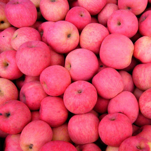 NingXia Fresh Bulk Red Fuji Apples Harga Murah