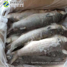 IWP seafood fish frozen grey mullet wholesale 600-800g