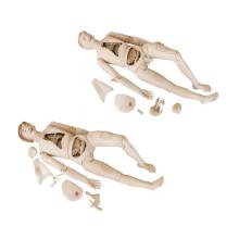 Boneca de treinamento de enfermeira de alta qualidade (fêmea)