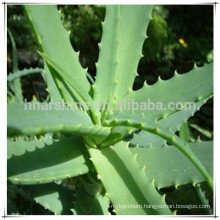 Aloe Vera Extract,Aloe Emodin,Aloeemodin with ISO 9001, Kosher, Halal certificates