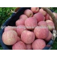 China fresca manzana fresca fuji