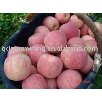 chinese top fresh fuji apple