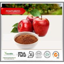 100% natürliche hochwertige kosmetische Grade Apfelextrakt Pulver Polyphenole 80% in Groß