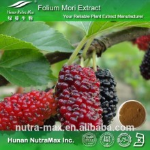 Hot Sell Mulberry Leaf Extract, Mulberry Leaf Extract Powder, Mulberry Leaf Extract 1%