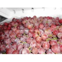 Economic crop fresh red grape