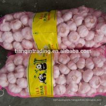 Fresh red garlic in China with bag package