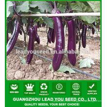 NE01 Shuibei F1 hybrid eggplant seeds, eggplant seeds for sale,seeds to sow