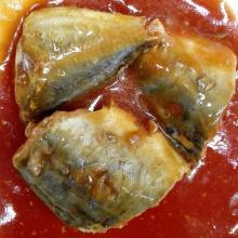 Konservierte pazifische Makrele in Tomatensauce