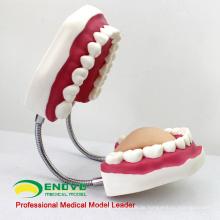 VERKAUFEN Sie 12562 übergroße 6 x lebensgroße Zähne putzen