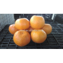 LUGAN FRESH ORANGE NEW TASTE AND ON SALE BEFORE CHRISMAS COMING