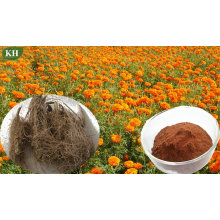 100% High Natural Marigold Root Extract Alpha-Terthienyl 0.1%