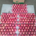 Shandong Fresh Red Fuji Apple2017 new season
