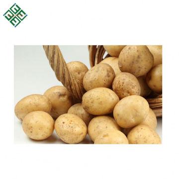 Exportação do Novo Corpo originou batata fresca