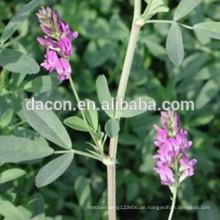Alfalfa Graspulver