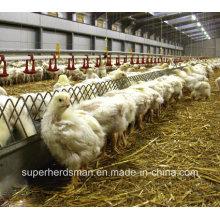 Automatische Geflügel-Landwirtschafts-Ausrüstung für Züchter