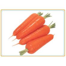 Verduras frescas zanahoria producción