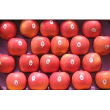 Exporter des pommes fraîches de pommes fraîches