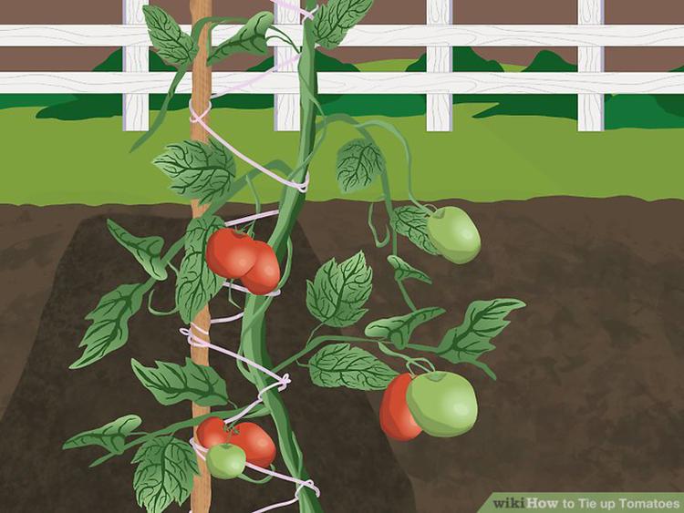 Compostable Tomato Twine