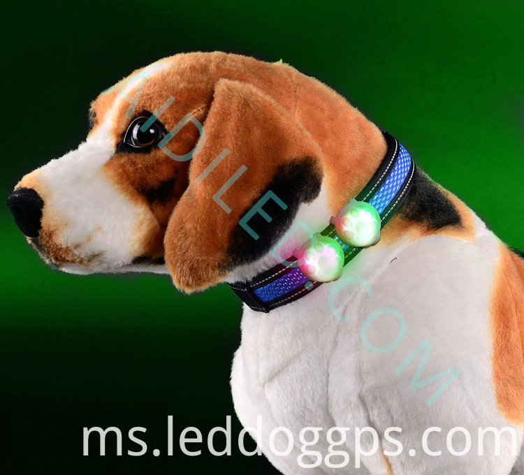 Dog Collar With Light Attached