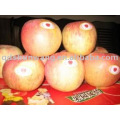 supply fuji apple with high quality