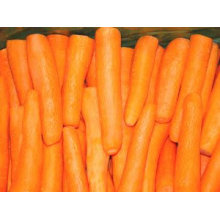 Chinese preminum carrot