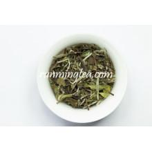 Avantages antioxydants du thé blanc chinois