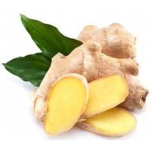 Wholesale organique frais gingembre prix