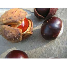 2013 new crop product-high quality good price chestnuts