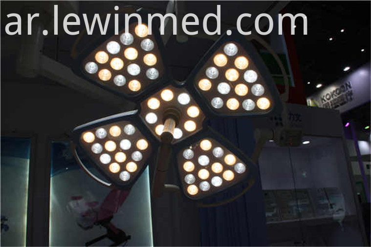 Petal led cold light lamp