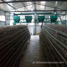 Bird-House Chicken Farm Layer Cages