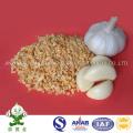 Масляные чесночные гранулы / Жареные чесночные гранулы Горячие продажи