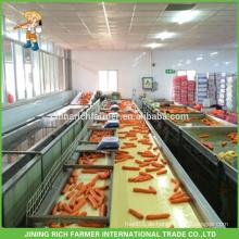 2016 Ernte Chinesische frische Karotte gereinigt & gewaschen