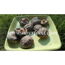 Cogumelo de Shiitake secado liso orgânico inteiro fresco vegetal