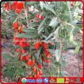 Hot selling china Organic Dried Goji berries