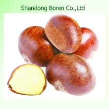 Chinese Chestnut Shandong Chestnut Fresh Chestnut