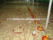 Ground Farming Chicken Poultry Farm Equipment