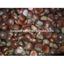 bolsa de 5 kg de castaño chino África