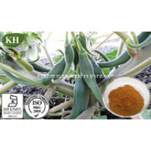 High Quality Devil′s Claw Extract; 1%-5% Harpagosides